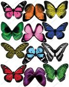 Cakeshop 12 X PRE-CUT Assorted Colour Edible Butterfly Cake Toppers DELIVERED