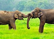 Stunning All Inclusive Sri Lanka
