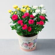 Summer Rose Planter!