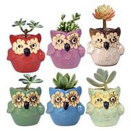 6 X Ceramic Owl Catcus Pots