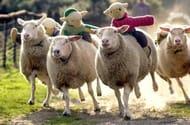 Half Price Family Entry to the Big Sheep Devon Theme Park