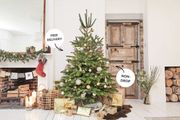 Get a Free Houseplant Gift Card with Any Christmas Tree Ordered from Patch