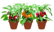 Terracotta Chilli Trio Grow Set