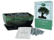Grow Your Own Bonsai Tree Olive Kit