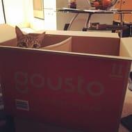Try Gousto Gousto Trial 50% Off