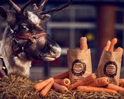 Free Bag of Carrots for Rudolph at Morrisons