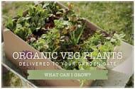 20% off Vegetable Plants