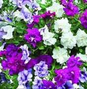 £5.00 off Plug Plants and Reay Plants