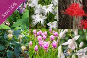 Japanese Plant Collection - save 20%