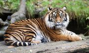 Dudley Zoological Gardens Family Ticket for 4