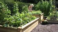 10% off Fruit and Veg Walk at Harrod Horticultural
