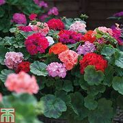 £2.50 off per Pack on 2 Garden Ready Plant Orders at Thompson & Morgan