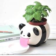 Papa Peropon Drinking Animal Planter - Panda