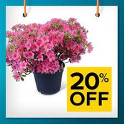 20% off All Outdoor Plants at B&Q This Weekend