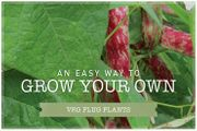 20% off All Veg Plants and Veg Patches