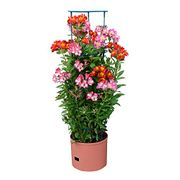 Self Watering 4 Tier Jumbo Tower Fruit & Vegetable Vine Plant