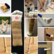 Cat/dog Paw Furniture Socks 4pc Free Delivery