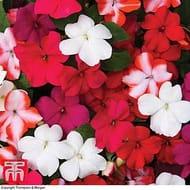 Garden Ready Multi Buy Plants Offer