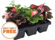 Buy 1 Get 1 Free ALL Bedding Plant Packs