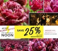 Farmer Gracy Flower Bulbs - 48h Flash Offer save 25% on Tulip 'Nachtwacht'