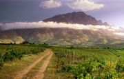 Win a Case of Award-Winning South African Wines