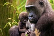 15% off ZSL London Zoo Family Entry Bookings at Buyagift