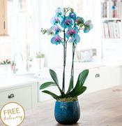 15% off All Plants at Blossoming Gifts