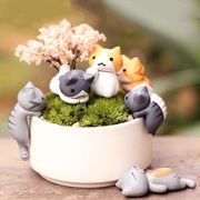 6 Cute Miniature Cats + Free Delivery
