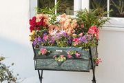 Metal Garden Trug Planter with Seeds & Optional Cover - 2 Colours!