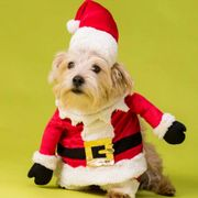 House of Paws Santa Front and Hat Set Dog Fancy Dress