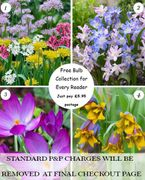 Free 100 Spring and Early Summer Flowering Bulbs Just Pay Postage