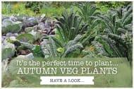 25% off Veg Patches & Veg Plants*