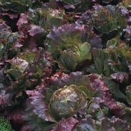25% off Autumn Plants & Patches