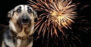 FREE 'Fireworks and Your Pet' Guide
