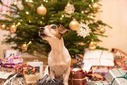 Christmas Advent from Petplan