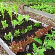Rocket Gardens 25% off Year round Veg Patches