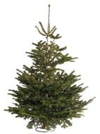 Nordman Fir Christmas Tree 6-7ft