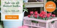Bakker.com - up to 70% off All Flower Bulbs. Limited Supply!
