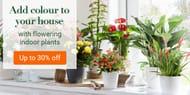 Bakker.com - up to 30% off on Indoor Plants