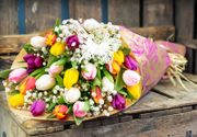 British Tulips Bunch for £14.99 + Free Delivery