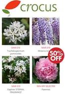 CHEAP! CROCUS Gardening - Biggest Choice of Plants in UK!