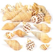 Baker Ross Mollusc Shells, Set for Children and Adults