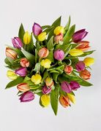 British Tulip Trio