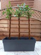 Trough Planter & 3 X Willow Wand Plants - £29.99 Delivered