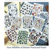 FREE Watercolour Wildlife Postcard Pack for £2.99 p&p