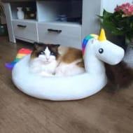 Unicorn Pet Bed - Save £15