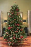 The Woodland Pine Tree (3ft to 20ft) - Starting from £27.99