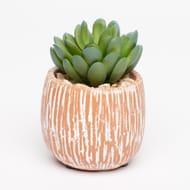 Small Artificial Succulent Plant in Striped Concrete Pot
