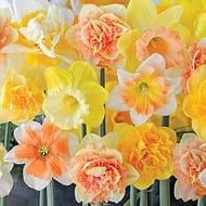 Garden Bulbs at £3 a Pack