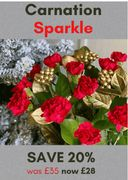 20% off the Carnation Sparkle